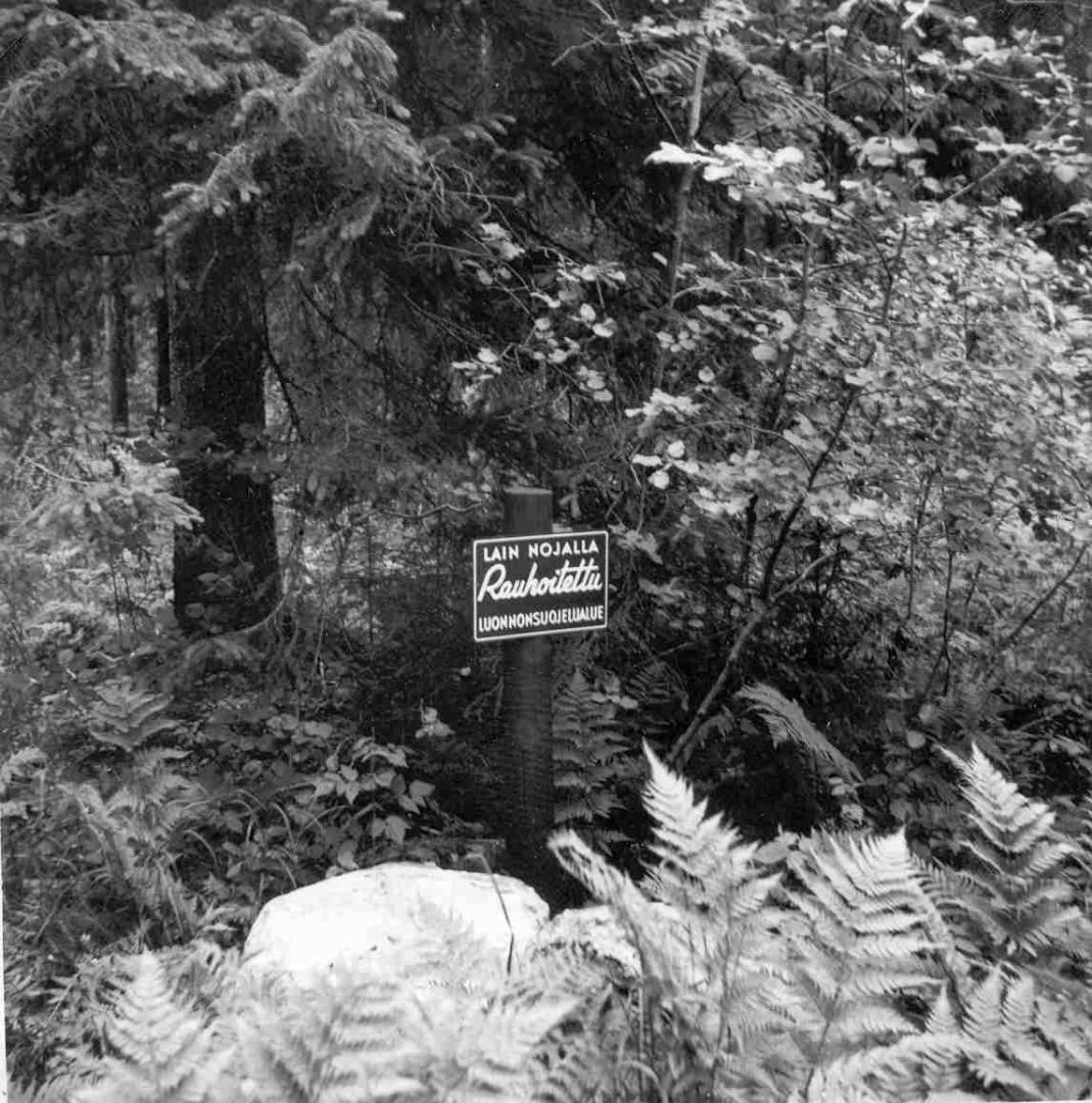 Sinivuoren Luonnonpuisto